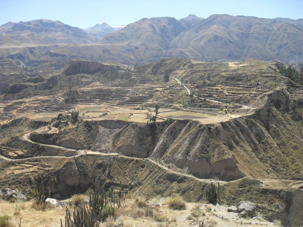 Ausblick auf die Terrassen des Colca-Canyons