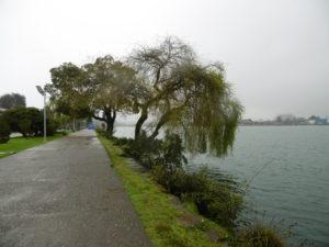 Spaziergang an der Promenade von Valdivia