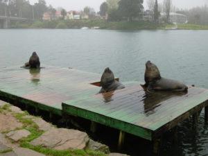 Seehunde auf der Plattform