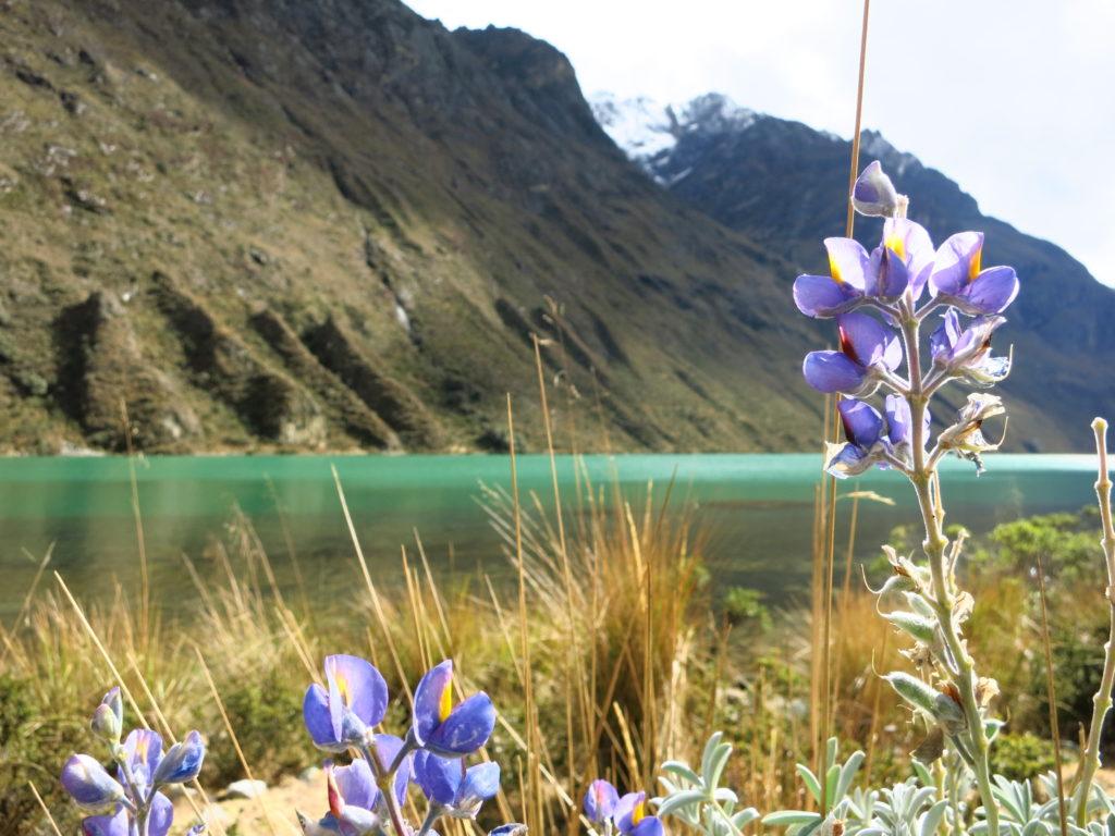 Traumhafte Lagune auf den Santa Cruz Trek bei Huaraz