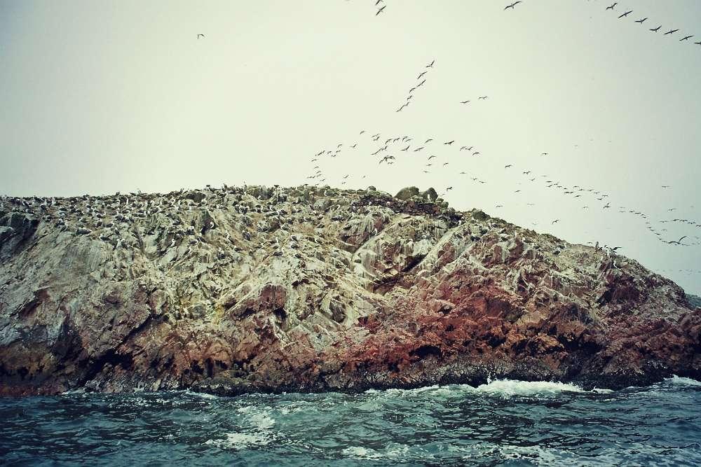 Die Islas Ballestas zählen zum Nationalreservat Paracas