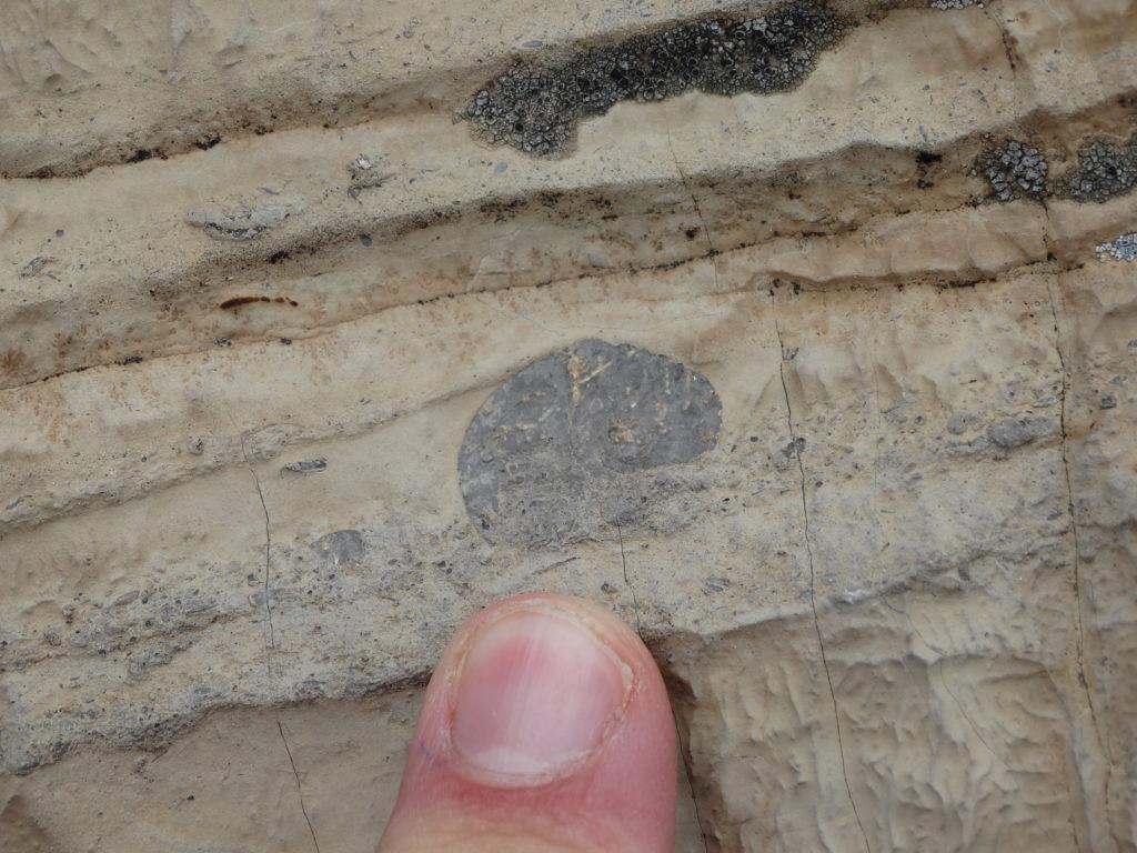 Ammoniten im Kalkstein auf der Sonneninsel